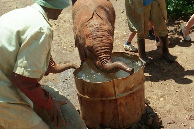 動物孤児院の子象